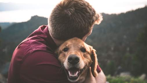 Мій чотирилапий друг: 5 душевних фільмів про собак, які повинен подивитись кожен