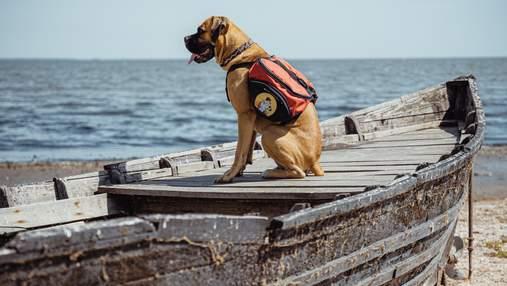 """Редкие животные дельты Дуная – в серии детских экопрограмм """"Красные рюкзаки"""": трейлер"""